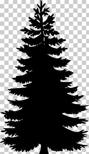 Pine Tree Fir Silhouette PNG