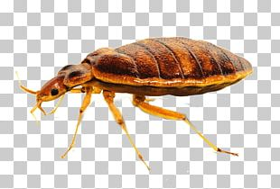 The Bed-bug Bed Bug Control Techniques Bed Bug Bite Pest Control PNG