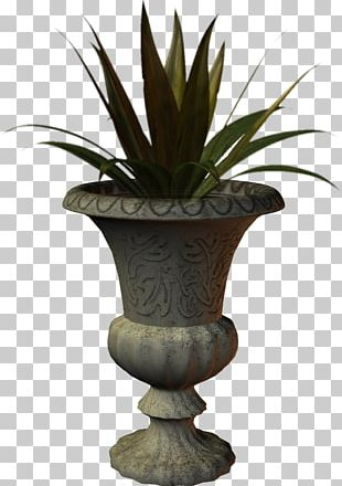 Vase Agave Urn INAV DBX MSCI AC WORLD SF Arecales PNG