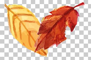 Hand-painted Leaves PNG