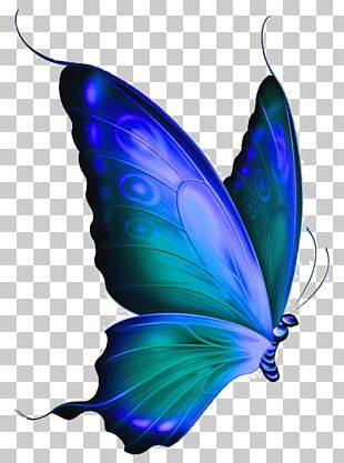 Monarch Butterfly Morpho Menelaus Blue PNG