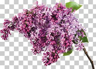 Lilac Flower Bouquet Garden Roses PNG