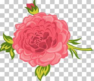 Garden Roses Cabbage Rose Floral Design Cut Flowers Carnation PNG