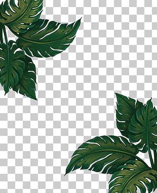 Musa Basjoo Banana Leaf Euclidean PNG