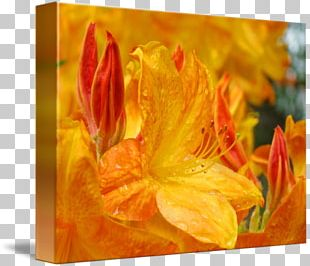 Canna Rhododendron Acrylic Paint Rectangle Tray PNG