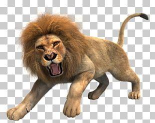 Lionhead Rabbit Roar Big Cat PNG