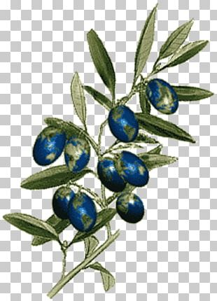 Olive Branch Petition Boston Massacre Laugh Your Head Off Bilberry Colony PNG