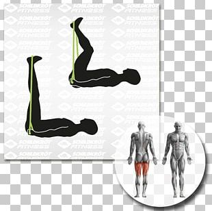 Physical Fitness Balance Board Exercise Equipment Muscle Arm PNG