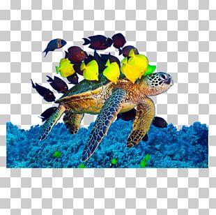 Loggerhead Sea Turtle Underwater Algae PNG