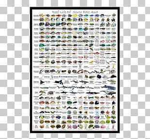 Poster Coral Reef Fish Saltwater Fish Text PNG