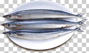 Sardine Pacific Saury Fish Products Oily Fish PNG