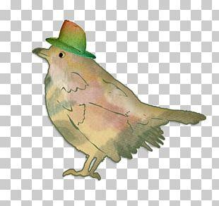 Bird Greeting Card Birthday Illustration PNG