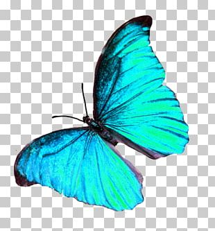 Brush-footed Butterflies Glasswing Butterfly Gossamer-winged Butterflies Insect PNG