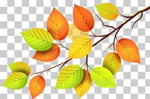 Paper Autumn Leaves Leaf PNG