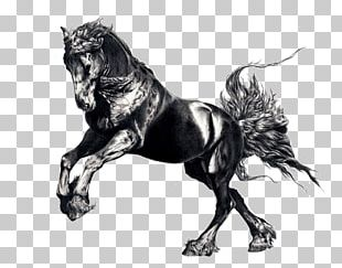 Friesian Horse Arabian Horse Drawing Painting Stallion PNG