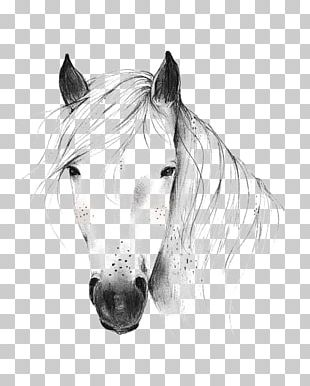 Wild Horse Drawing Illustration PNG