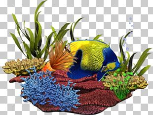 Coral Reef Reef Aquarium Sea PNG