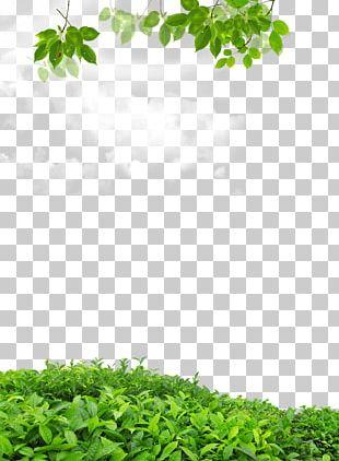 Leaf .dwg PNG