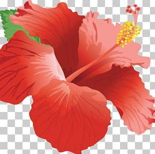 Shoeblackplant Home Page Web Design PNG