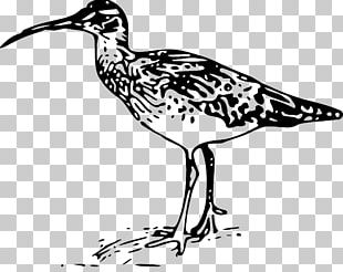 Bird Graphics Line Art Bristle-thighed Curlew PNG