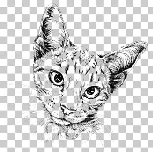 Cat Drawing Painting Illustration PNG