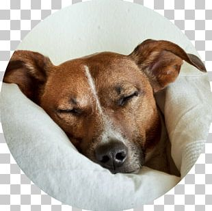 Dog Pet Sitting Cat Veterinarian PNG