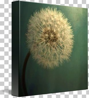 Dandelion Fine-art Photography Nature Photography PNG