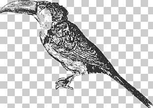 Bird Finch Toucan Beak /m/02csf PNG