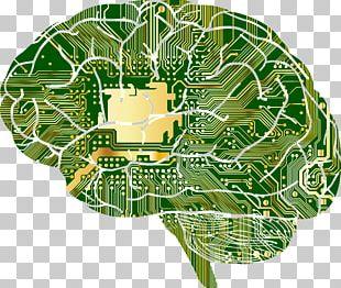 Google Brain Brainu2013computer Interface Human Brain Skull PNG