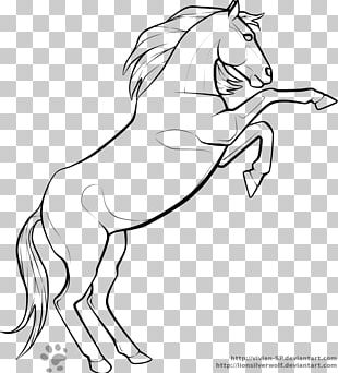 Rearing Tennessee Walking Horse Arabian Horse Fjord Horse Morgan Horse PNG