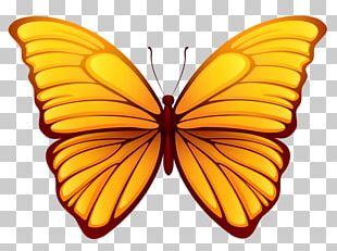 Butterfly Color PNG