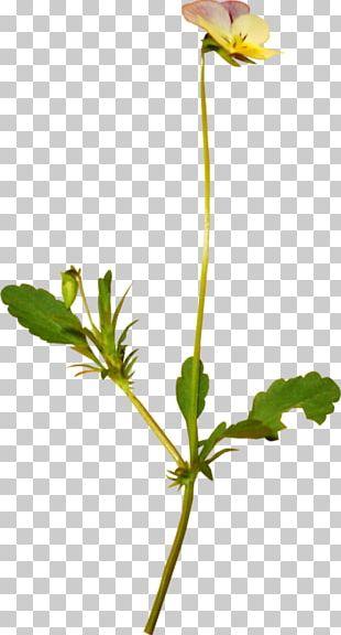 Petal Plant Stem Bud Leaf Flowering Plant PNG