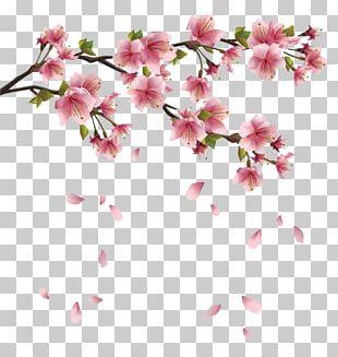 Flower Spring Branch PNG