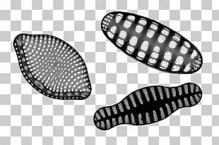 Southern Ocean Phytoplankton Diatom PNG