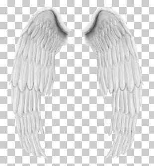 Angel Wings Buffalo Wing PNG