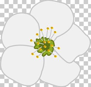 Cherry Blossom Flower Apple PNG
