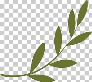 Olive Branch Peace Symbols Olive Wreath PNG