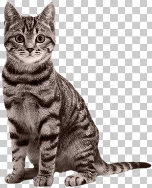 Cat Kitten Black Panther Felidae PNG