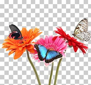 Monarch Butterfly Flower Stock Photography Fototapet PNG