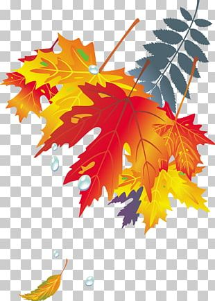 Maple Leaf Autumn Leaf Color Japanese Maple PNG