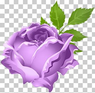 Rose Purple Flower PNG