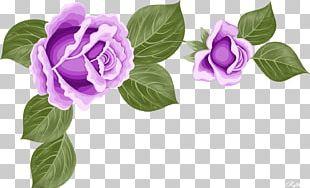 Garden Roses Cut Flowers Centifolia Roses Purple PNG