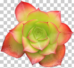 Flower Succulent Plant Green Cactaceae PNG