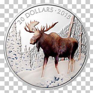 Moose Reindeer Antler Dollar Coin PNG