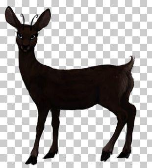Roe Deer Red Deer White-tailed Deer Elk PNG