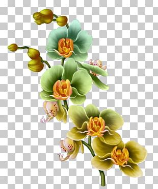 Floral Design Flower Drawing Painting PNG