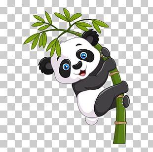 Giant Panda Cartoon Illustration PNG