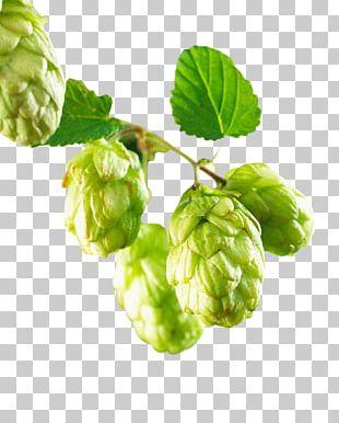 Beer Common Hop Hops PNG