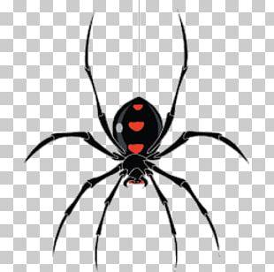 Web Crawler StormCrawler PNG