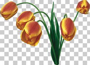 Display Resolution Tulip Cut Flowers Desktop Flower Bouquet PNG